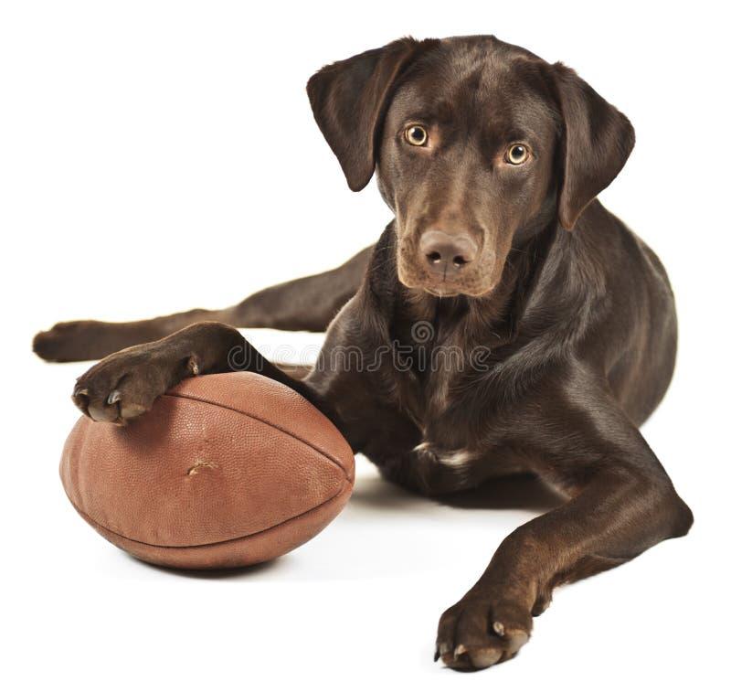Собака с футболом стоковая фотография rf