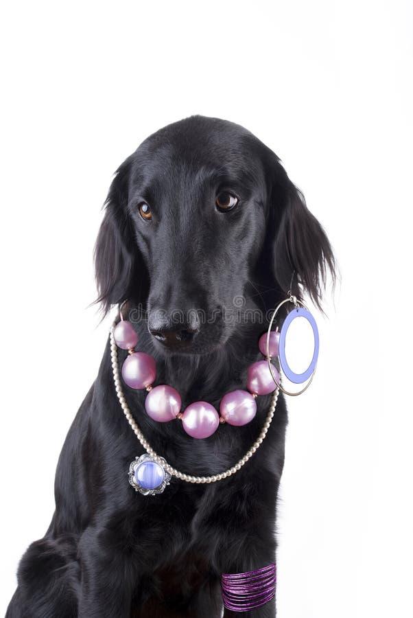 Собака с ювелирными изделиями стоковое фото rf