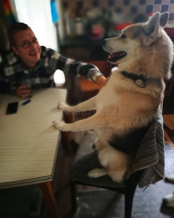 Собака таблицы стоковые изображения rf