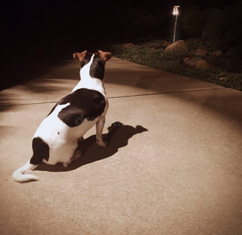 Собака теней стоковая фотография