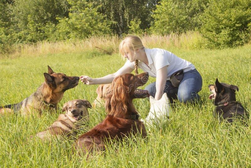 Собака тренера собаки подавая стоковая фотография rf