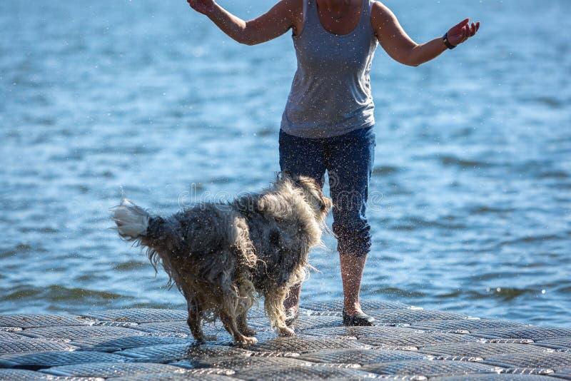 Собака трясет влажное мех стоковые изображения rf