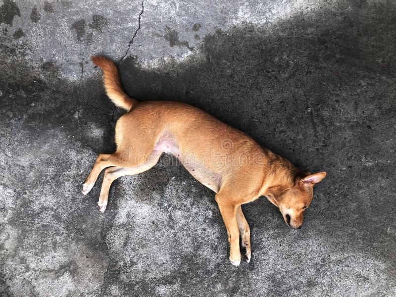 Собака улицы, бездомная ложь собаки на старом взгляде сверху конкретной дороги стоковые фотографии rf