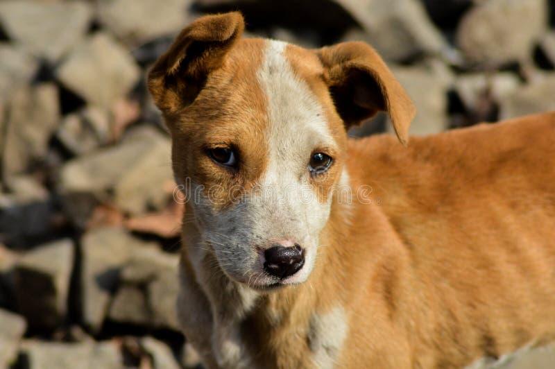 Собака улицы стоковые фотографии rf