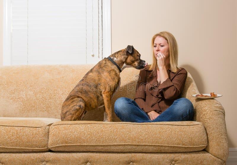 Собака умоляя для бекона стоковые фотографии rf
