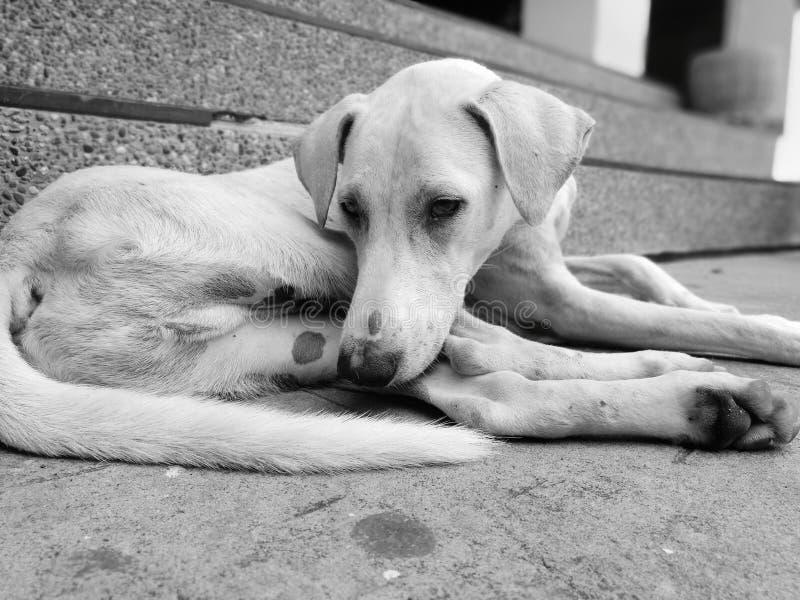 собака унылая стоковое фото