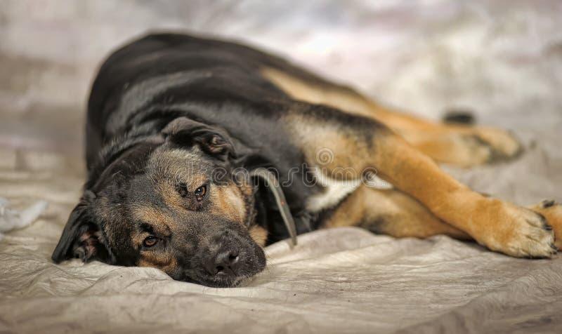 собака унылая стоковое изображение