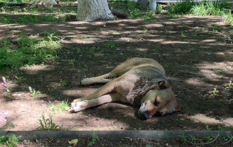 собака упала уснувший на обочине, горячем дне для давно пора собак для того чтобы отдохнуть живая природа животных стоковая фотография