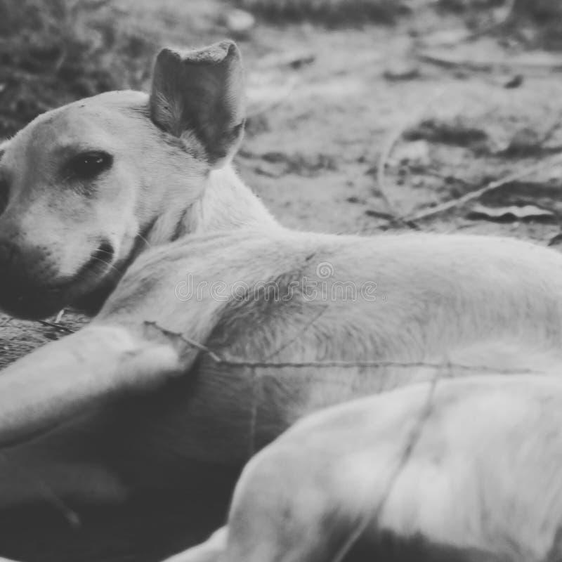 Собака улицы стоковые фото