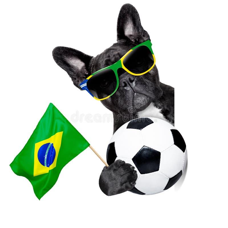 Собака футбола Бразилии стоковое фото rf