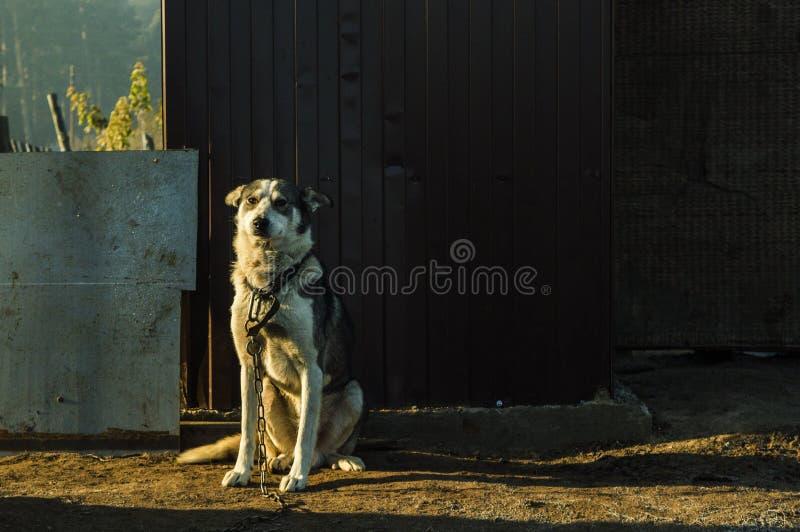 собака хорошая стоковое фото rf