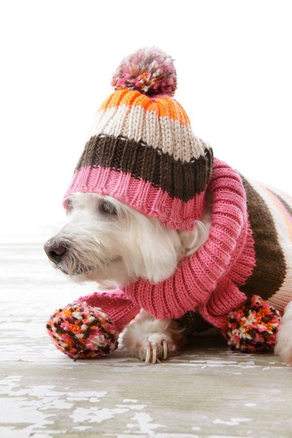 собака шикарная стоковое изображение