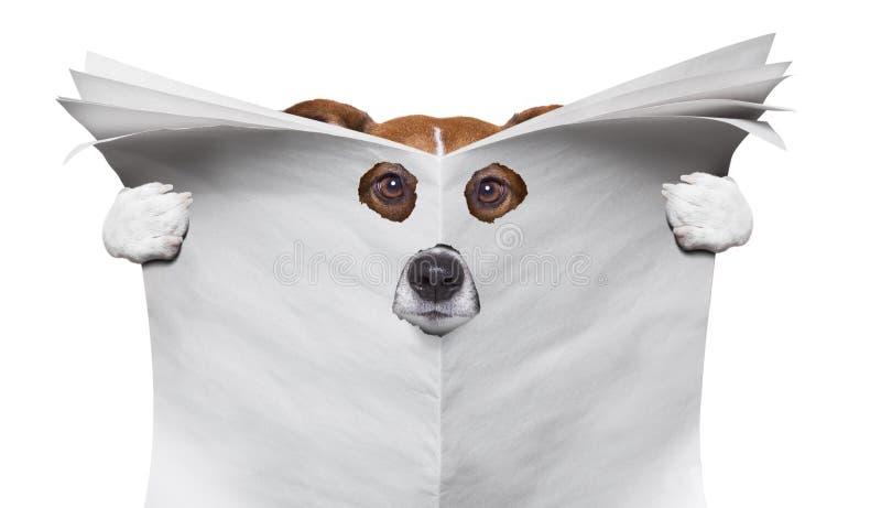 Собака шпионки читая газету стоковое изображение