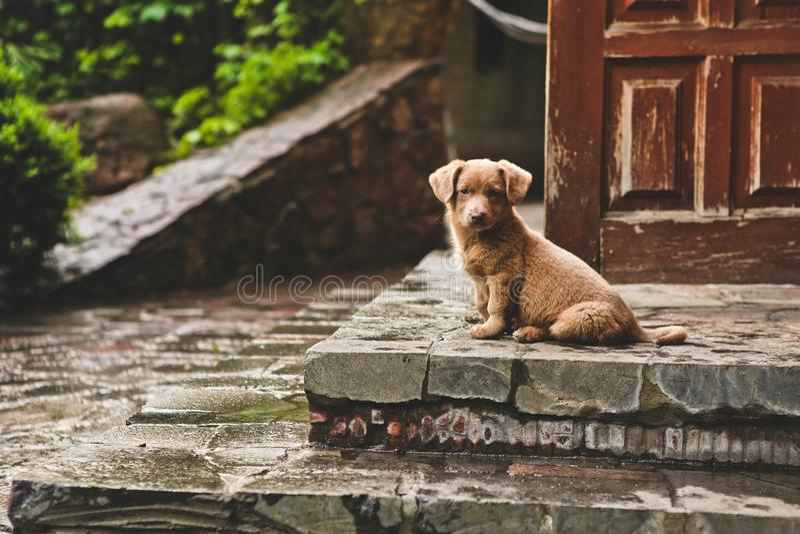 Собака щенка Брайна милая сидит дом шагов стоковая фотография rf