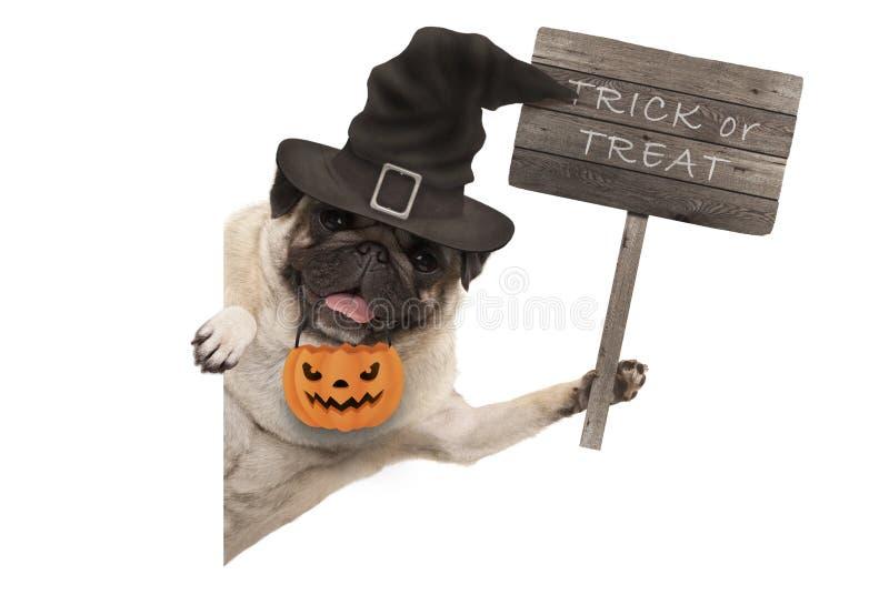 Собака щенка мопса хеллоуина задерживая деревянный знак с фокусом или обслуживанием текста, нося шляпой ведьмы и корзиной тыквы стоковые фото