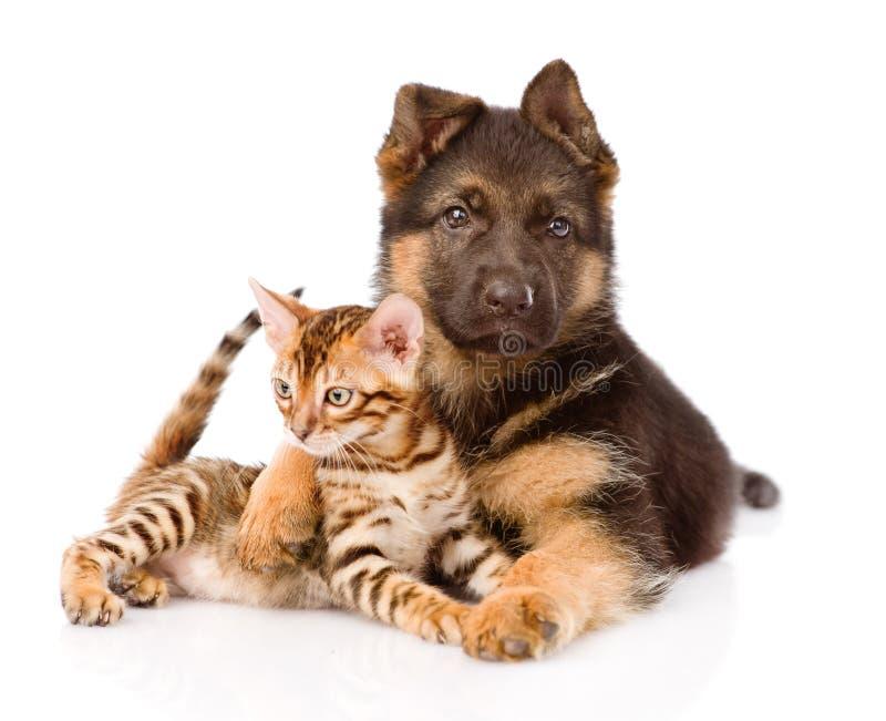 Собака щенка немецкой овчарки обнимая меньшего кота Бенгалии стоковое фото rf
