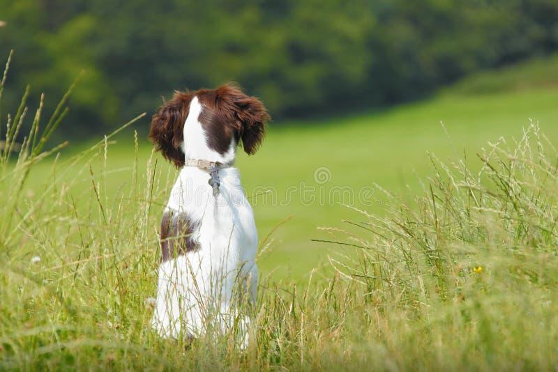 Собака щенка сидя терпеливейше