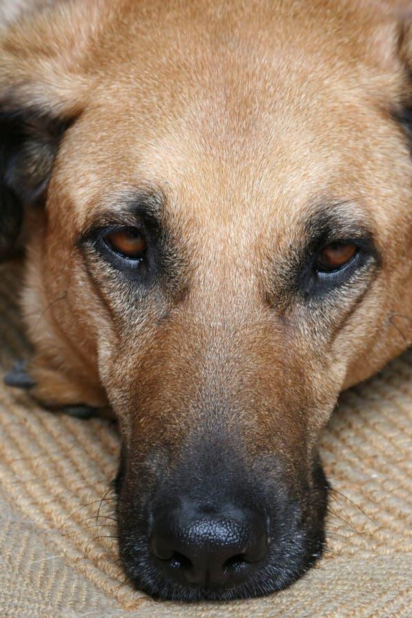 Собака 2 штока Стоковое Фото