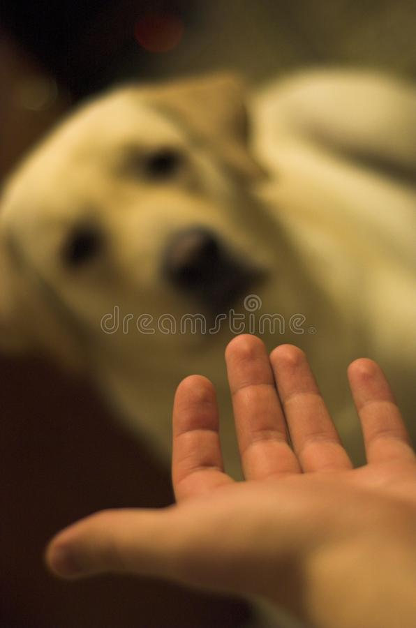 собака 2 стоковая фотография