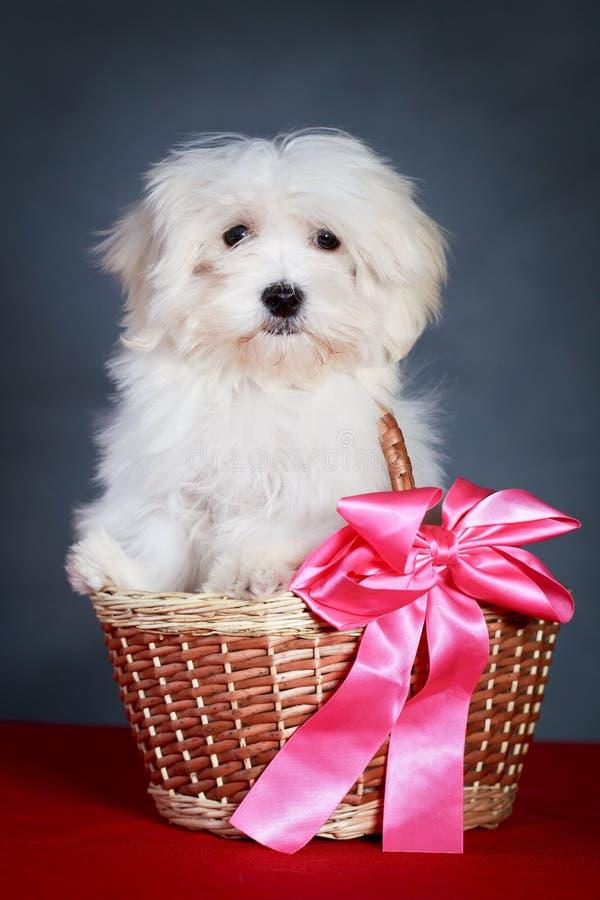 Download Собака стоковое фото. изображение насчитывающей пинк - 37925146