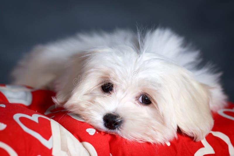 Download Собака стоковое фото. изображение насчитывающей собака - 37925262