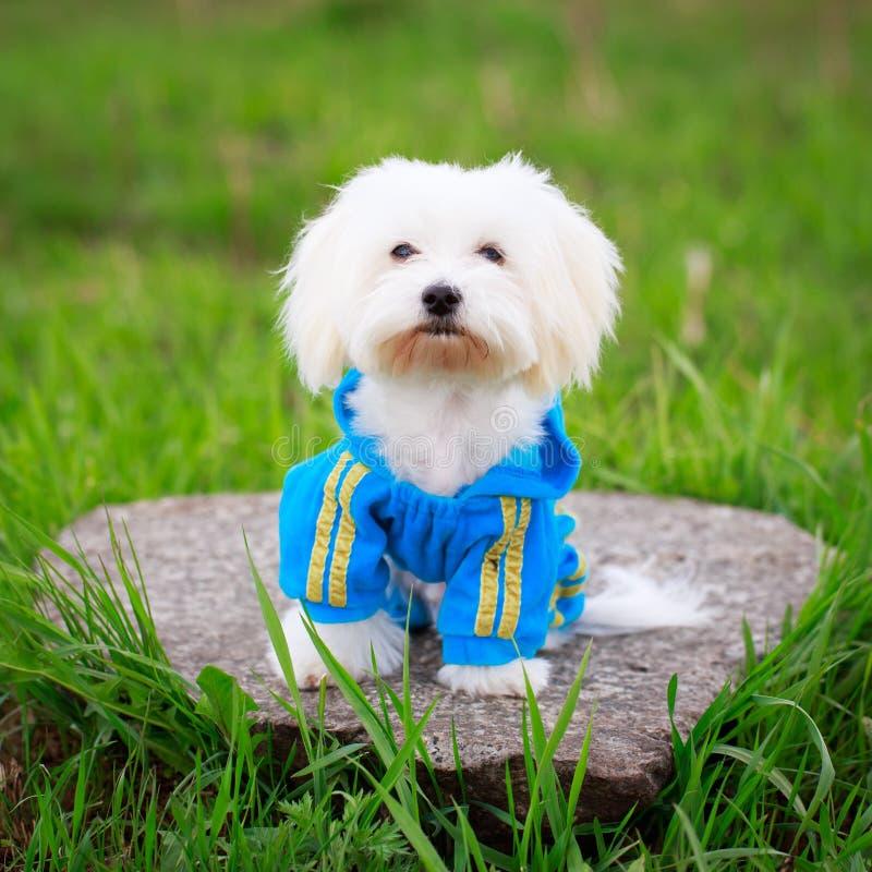 Download Собака стоковое фото. изображение насчитывающей ангстрома - 40591896