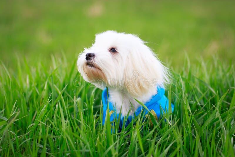 Download Собака стоковое изображение. изображение насчитывающей green - 40592001