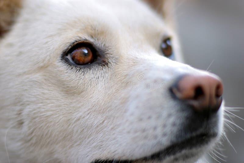 Download собака стоковое фото. изображение насчитывающей предохранитель - 484900