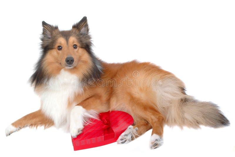 Download собака 8 романтичная стоковое изображение. изображение насчитывающей представлять - 482611