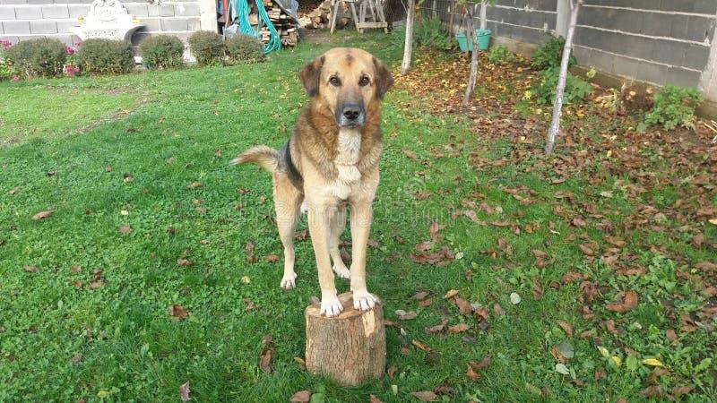 Download Собака стоковое изображение. изображение насчитывающей цветок - 81802621