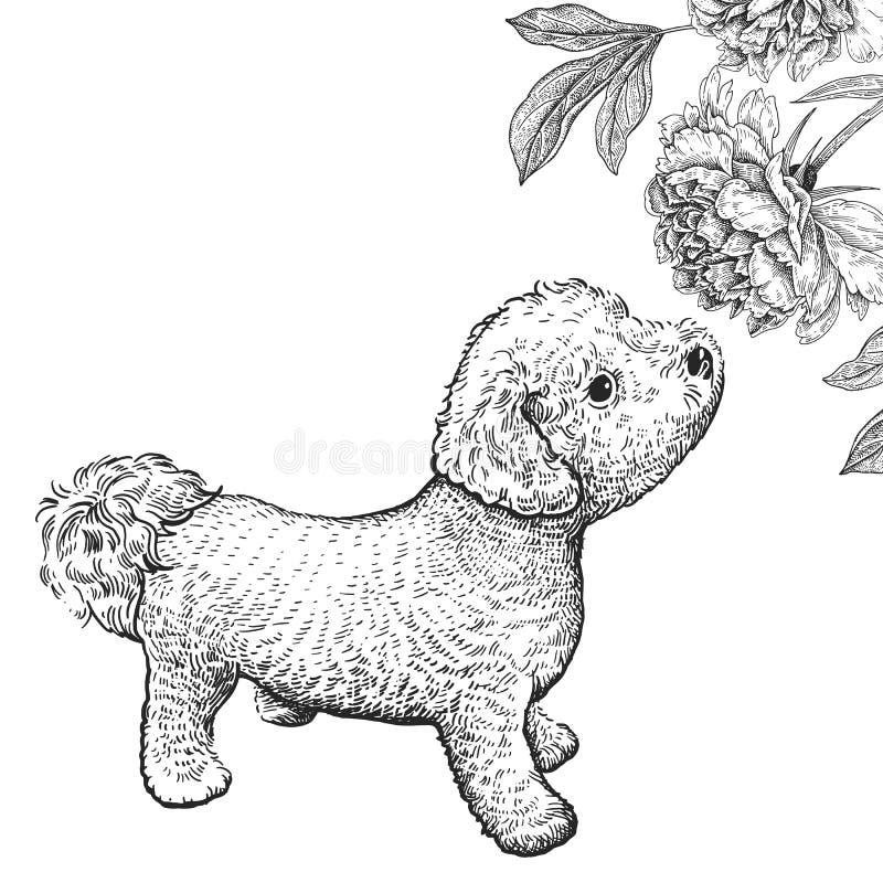 Собака Bishon Милый цветок пиона обнюхивать щенка Черно-белый ha бесплатная иллюстрация