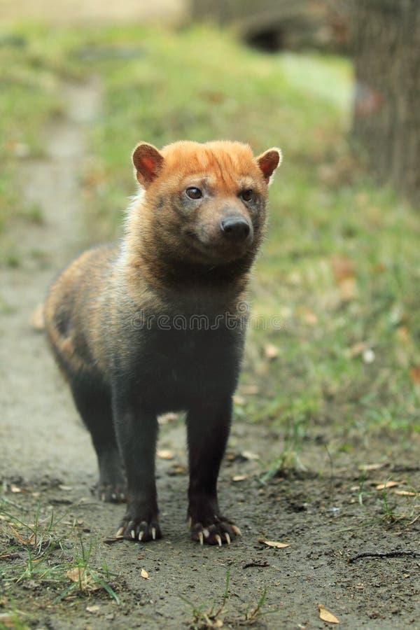 собака bush стоковые изображения