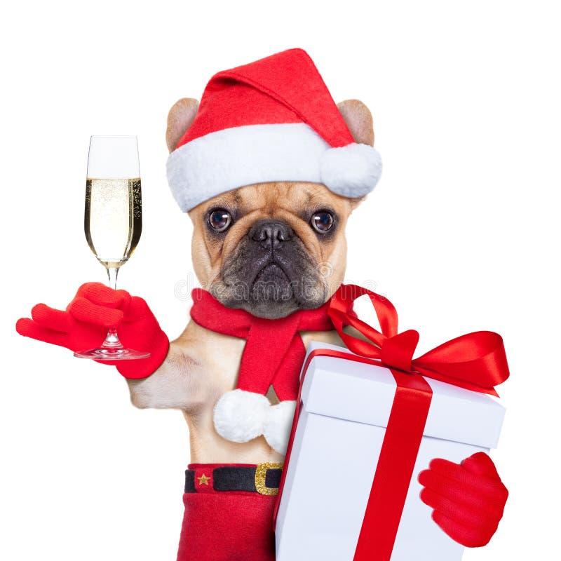 Собака calus Санты стоковое изображение