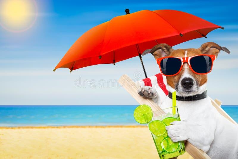 Собака cokctail лета стоковые фотографии rf