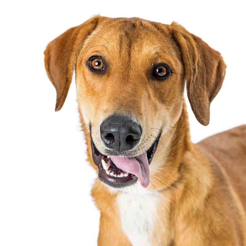 Собака Crossbreed портрета крупного плана счастливая усмехаясь стоковое фото