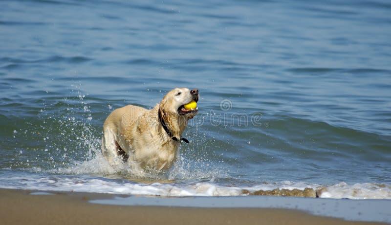 собака francisco 4 заливов вне san стоковая фотография rf