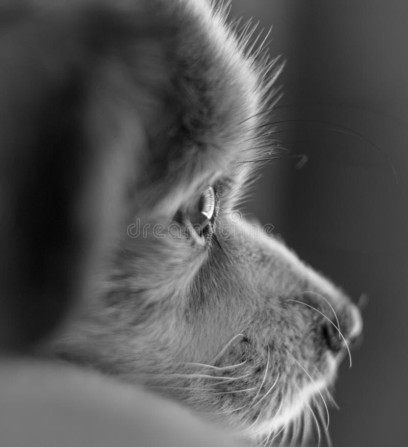 Собака Gazing вне окно стоковые изображения