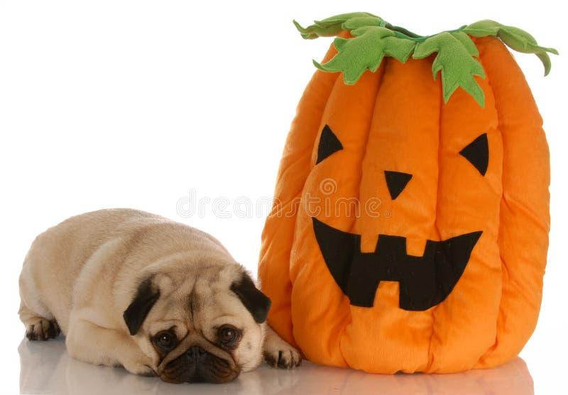 собака halloween стоковое изображение rf