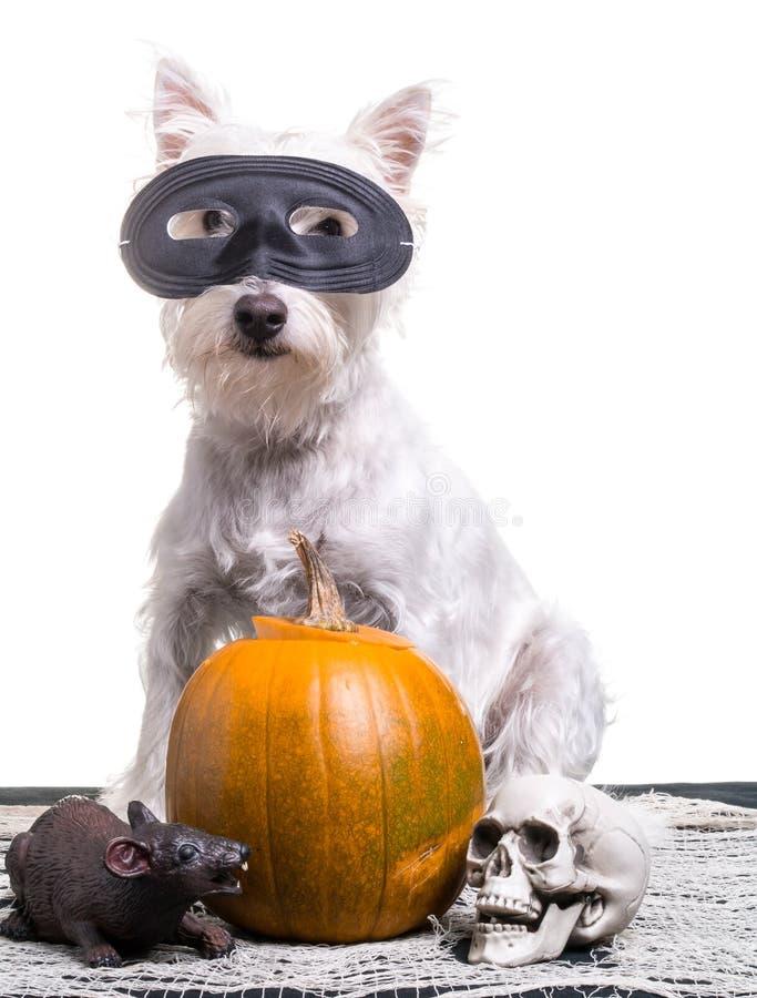 Собака Halloween стоковое фото