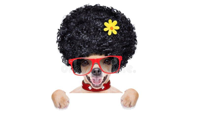 Собака Hippie стоковые фото