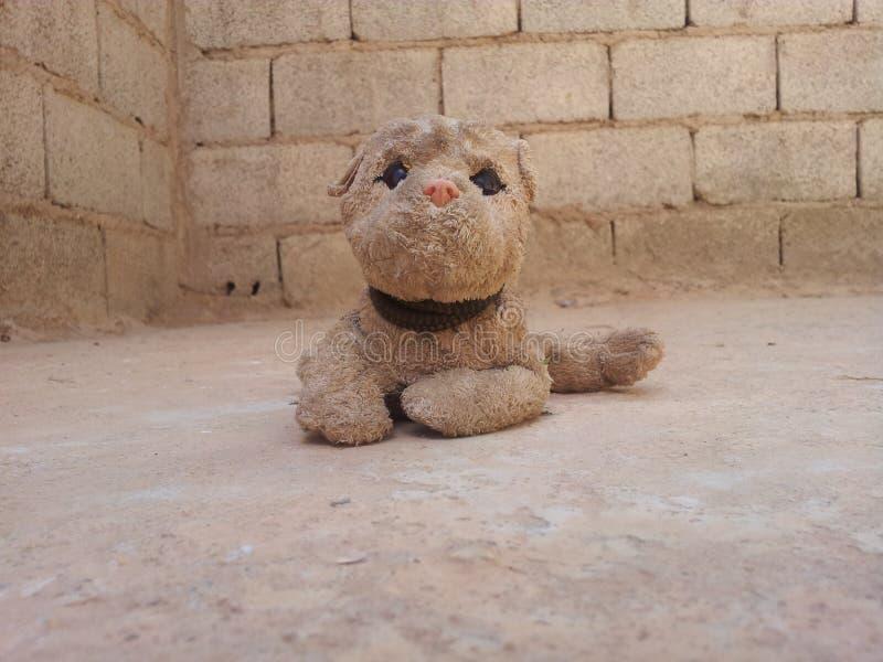 Собака Llittle стоковое изображение