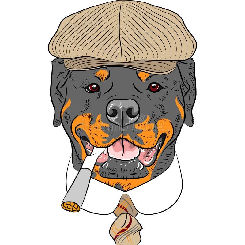 Собака Rottweiler битника шаржа вектора смешная иллюстрация штока