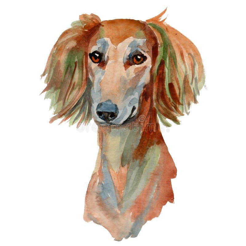 Собака Saluki, персидская борзая иллюстрация вектора