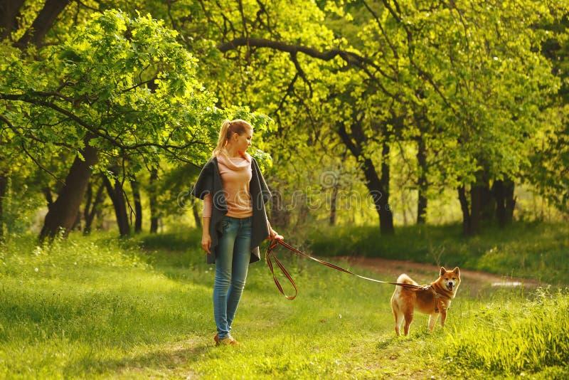 Собака Shiba Inu и девушка в лесе стоковая фотография rf