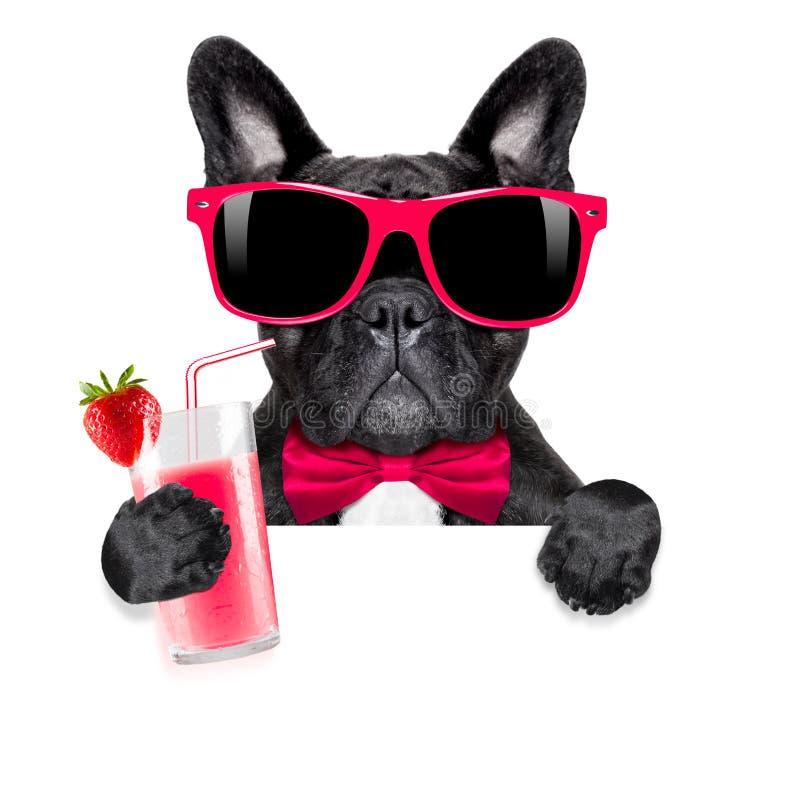 Собака smoothie коктеиля стоковая фотография rf