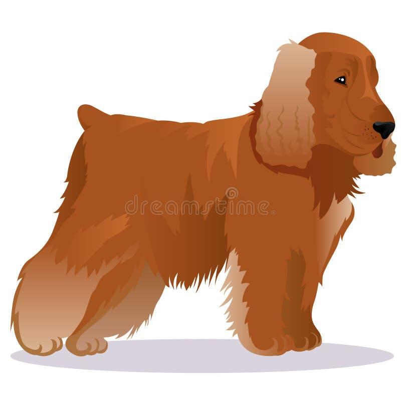 Собака spaniel кокерспаниеля иллюстрация штока