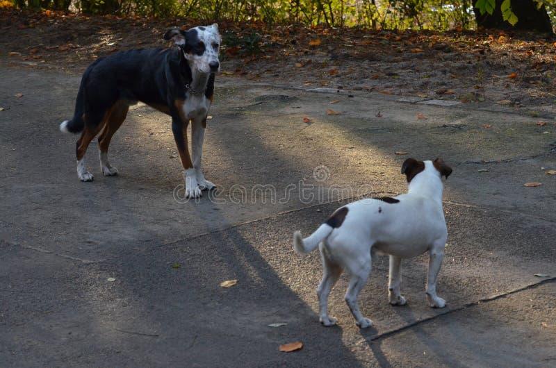 Собаки берлинца, Германия стоковые изображения