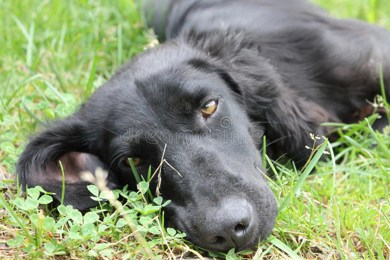 Собаки верноподданически и эмоциональны стоковое фото rf