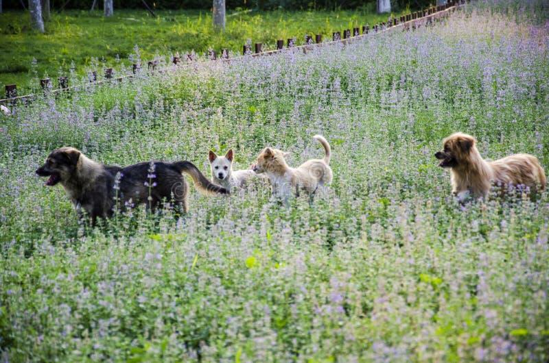 Собаки в траве фермы стоковые фото