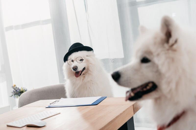 Собаки дела в офисе стоковое фото rf